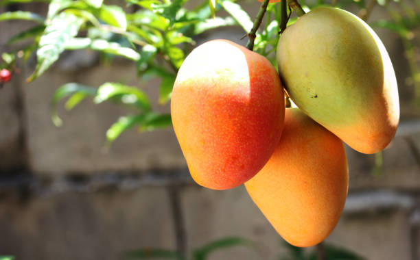 best digestive enzyme supplements fruits